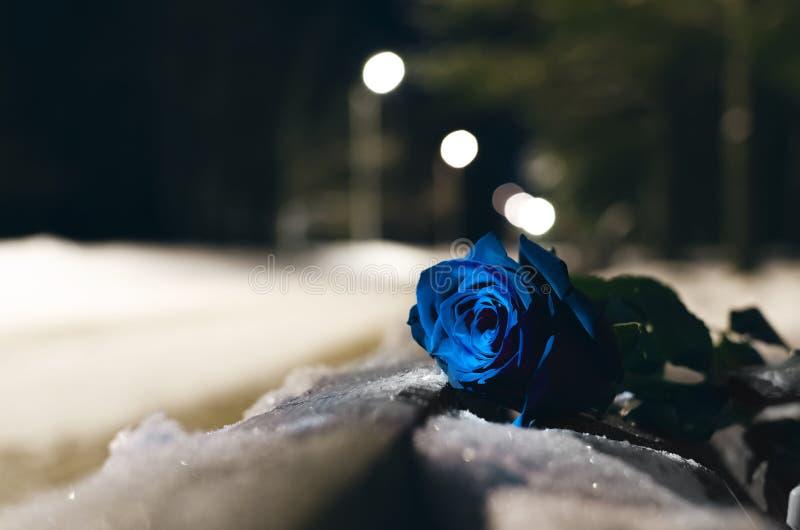 Rose azul foto de archivo