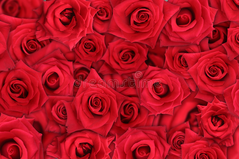 Download Rose Background Stock Photos - Image: 2333523