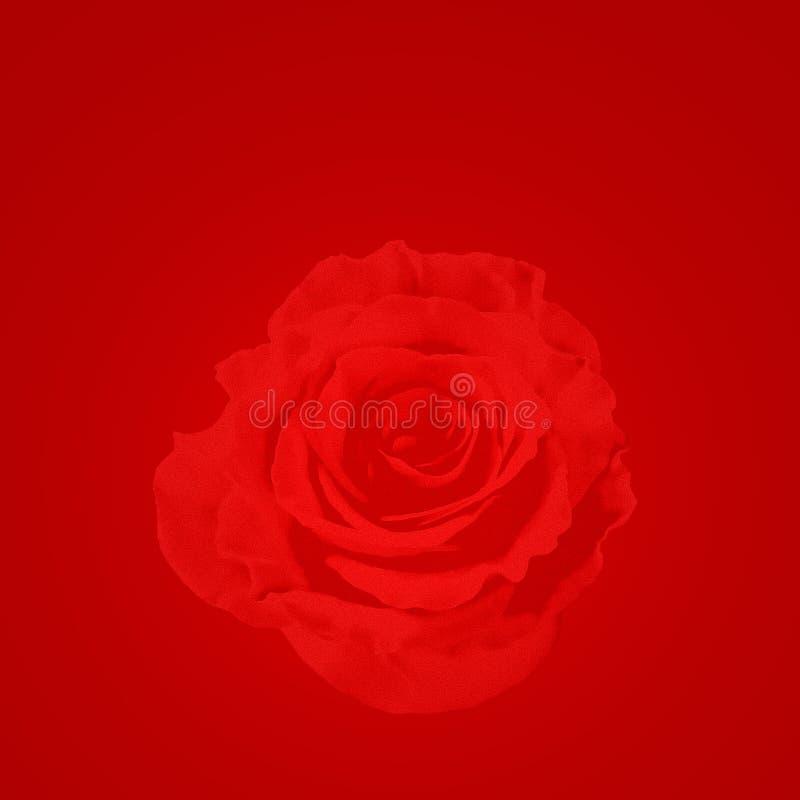 Rose background illustration royalty free stock images