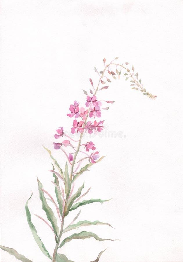 Rose-bay flower watercolor painting