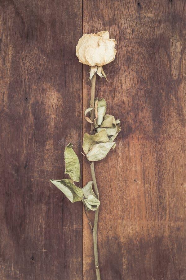 Rose bianche secche fotografia stock libera da diritti