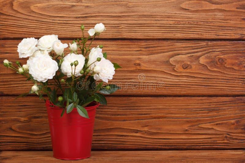 Rose bianche in un secchio rosso fotografia stock
