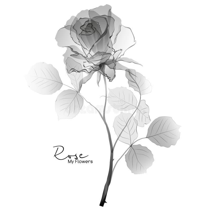 Rose black and white vector illustration