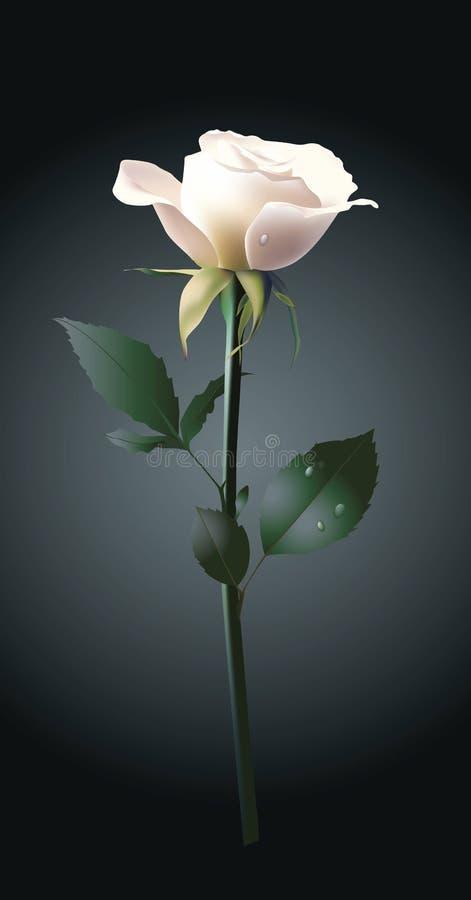 Rose blanche illustration de vecteur