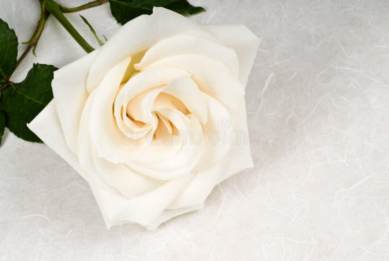 Download Rose Blanche Sur Le Papier Texturisé Image stock - Image du closeup, simple: 8655803