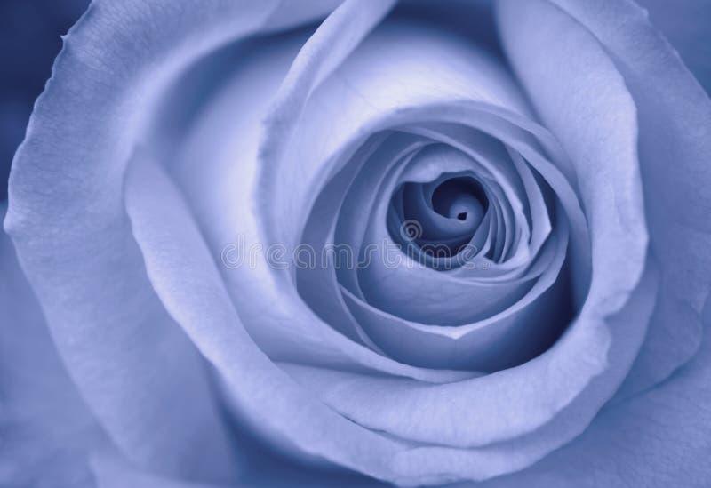 Rose bleue photo libre de droits