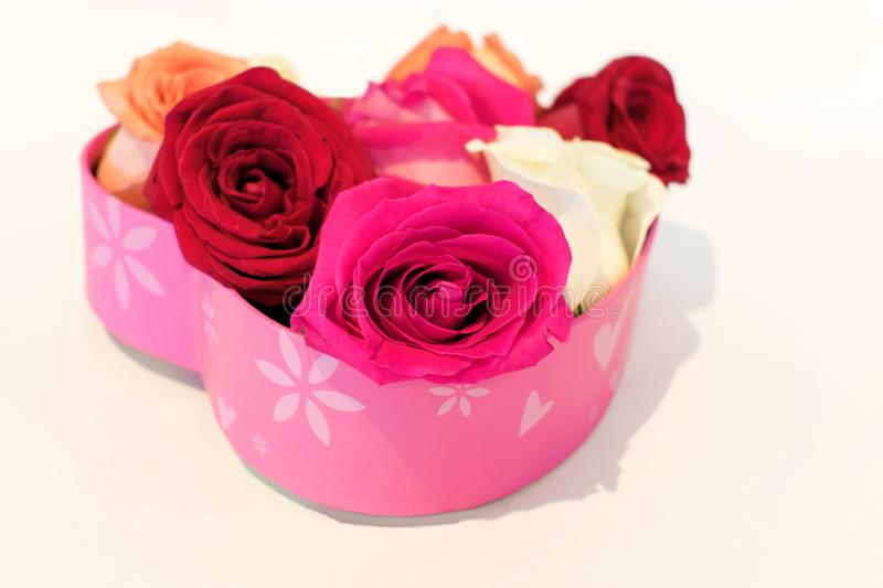 Rose blossoms in heart shaped pink box on white stock images