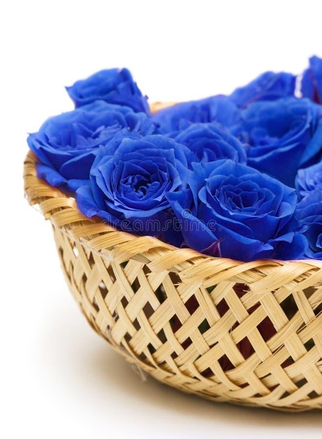 Rose blu in cestino fotografie stock libere da diritti