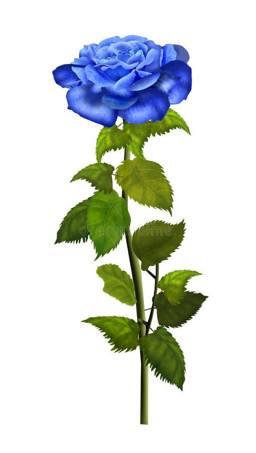 Rose blue isolated Illustration. Rose blue isolated, white background, illustration, vintage Blue rose beautiful isolated on a white background, illustration stock illustration