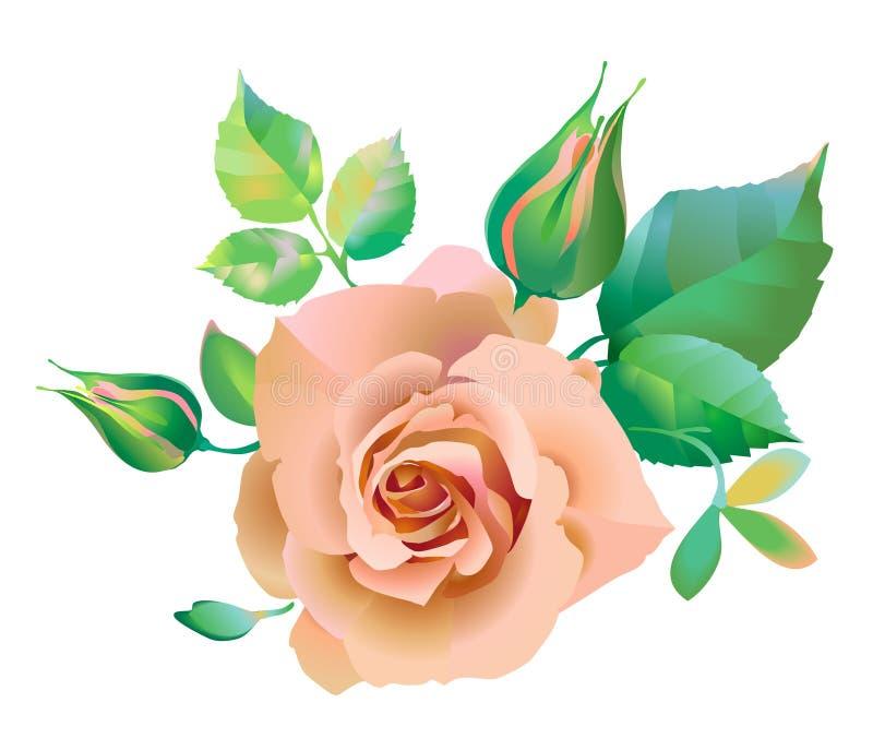Rose, Blumenrosa stock abbildung
