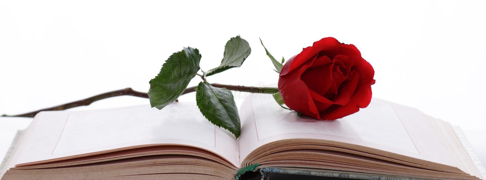 Rose and Book. A stalk of red rose on an open book against white background royalty free stock photos