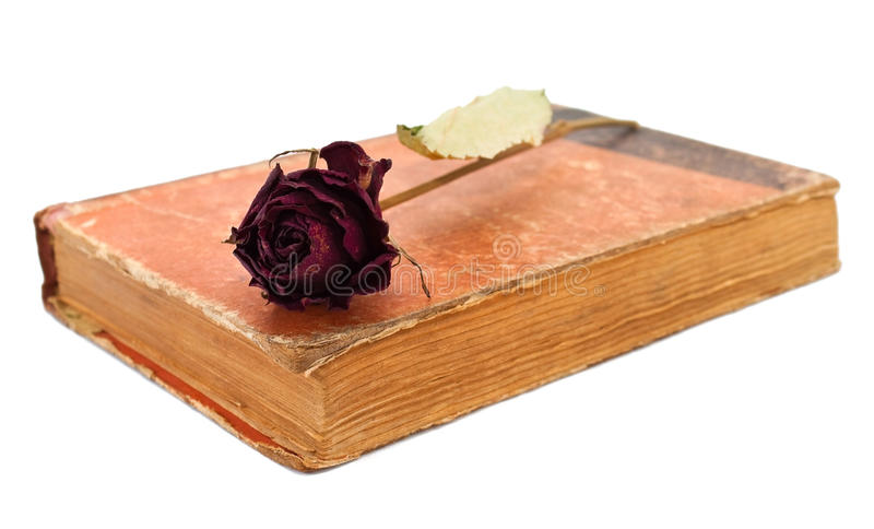 Download Rose on book stock photo. Image of memory, blossom, brown - 22523214