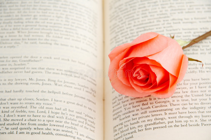 Rose on book. A pink rose on a book royalty free stock photography