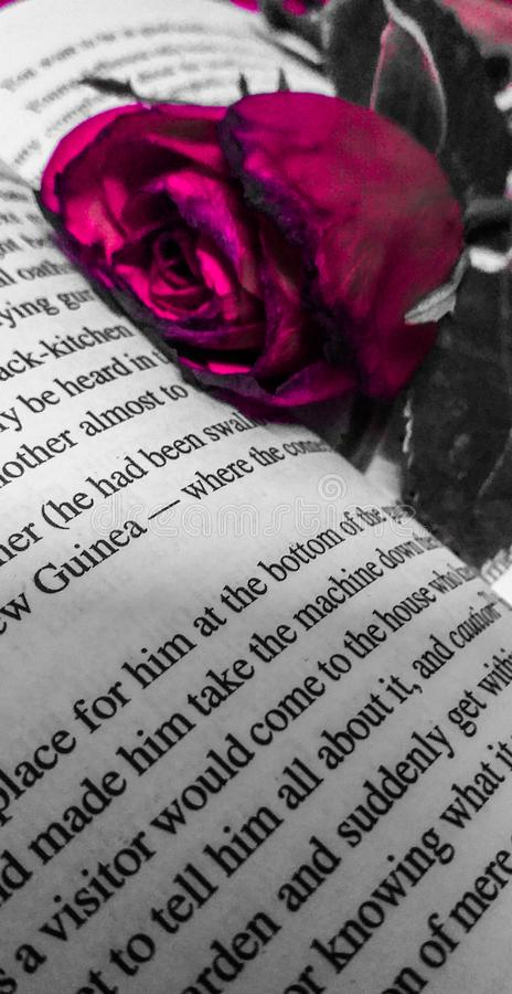 Rose in book with hues of gray love stock images