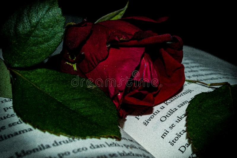Rose book red words stock photos