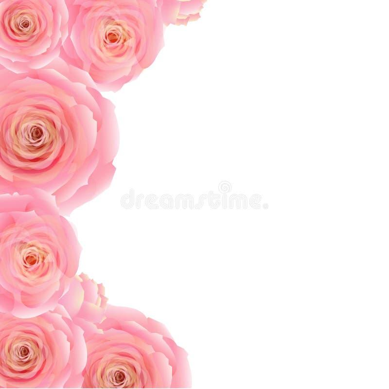 Rose Border cor-de-rosa ilustração royalty free