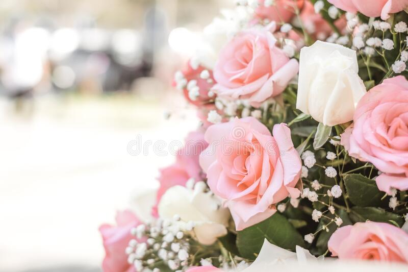 Rose bouquet in wedding day, love and romantic background. Pink rose flower blossom in vintage pastel color. flowers in spring stock photography