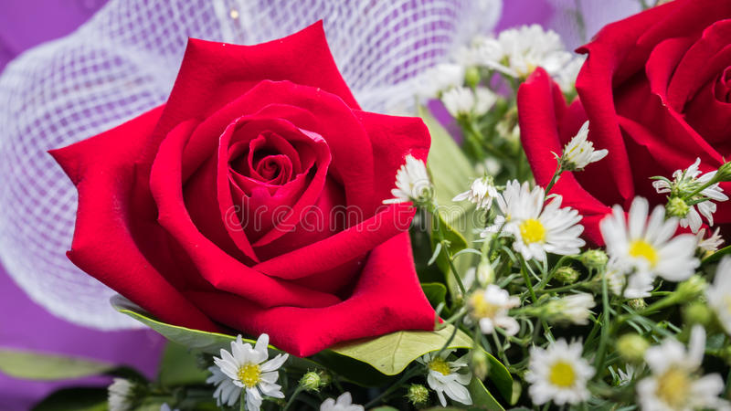Rose bouquet with White flower.  royalty free stock photos
