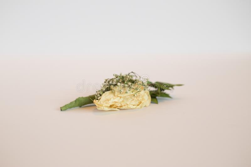 Rose boutonniere isolated on white. stock images