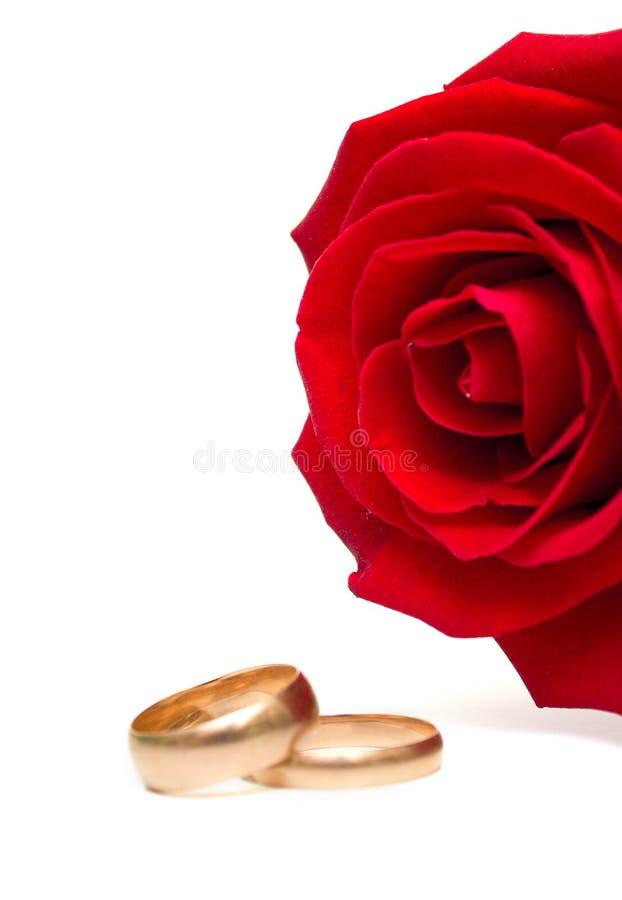 rose bröllop för cirklar royaltyfri fotografi