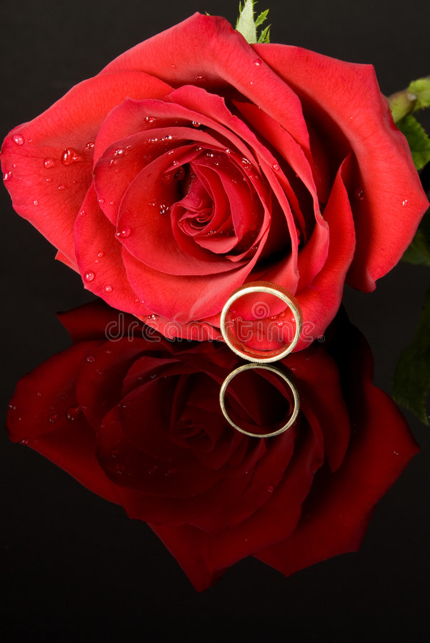 rose bröllop för röd cirkel royaltyfria bilder