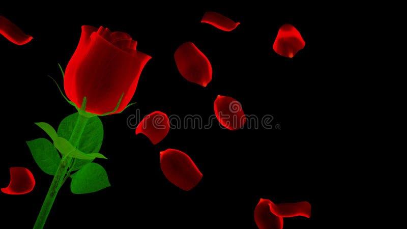 Rose brillante de rouge avec des pétales sur le fond noir illustration libre de droits