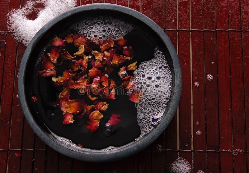 rose brunnsort för 05 petal arkivfoto