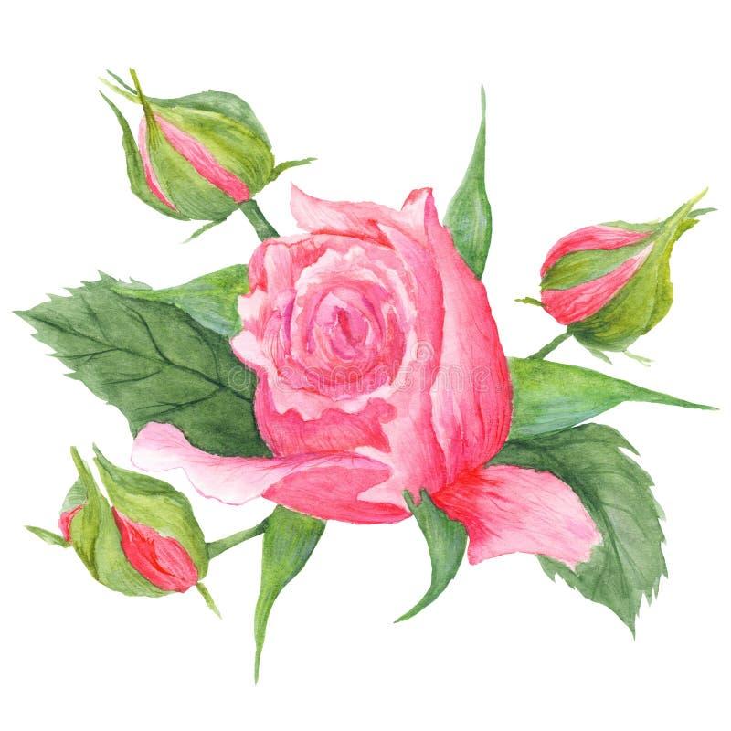 Rose Buds Botanical Illustration royalty-vrije illustratie