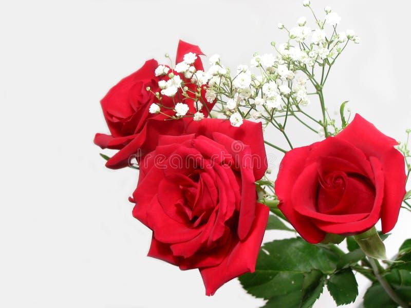 rose bukiet. obraz stock