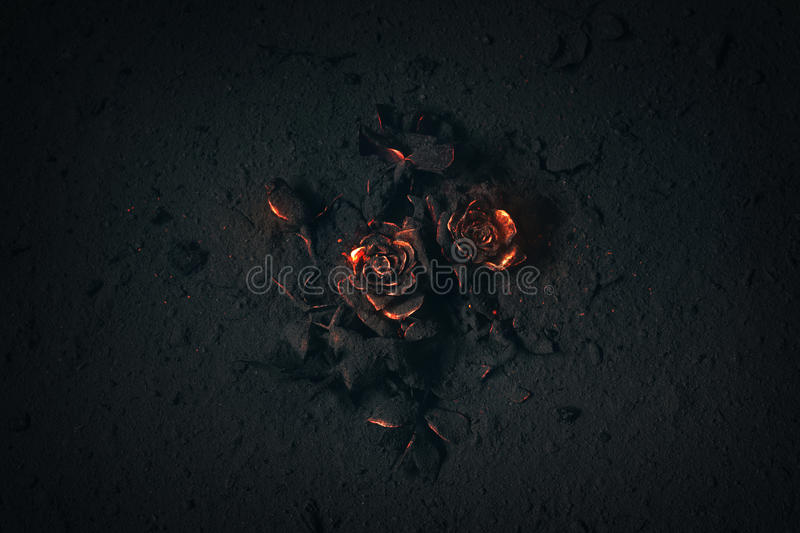 Rose buried in ashes. A rose buried in ashes with glowing embers royalty free stock images