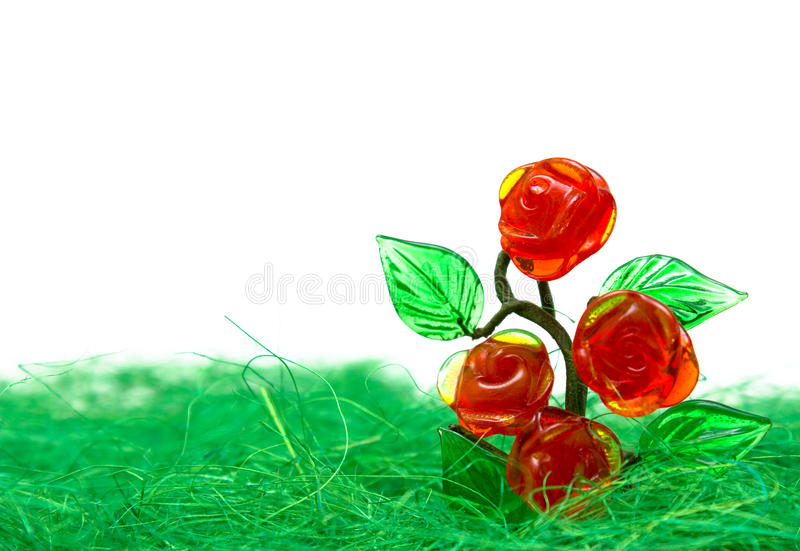 Download Rose bush in the white stock image. Image of macro, grass - 24766589