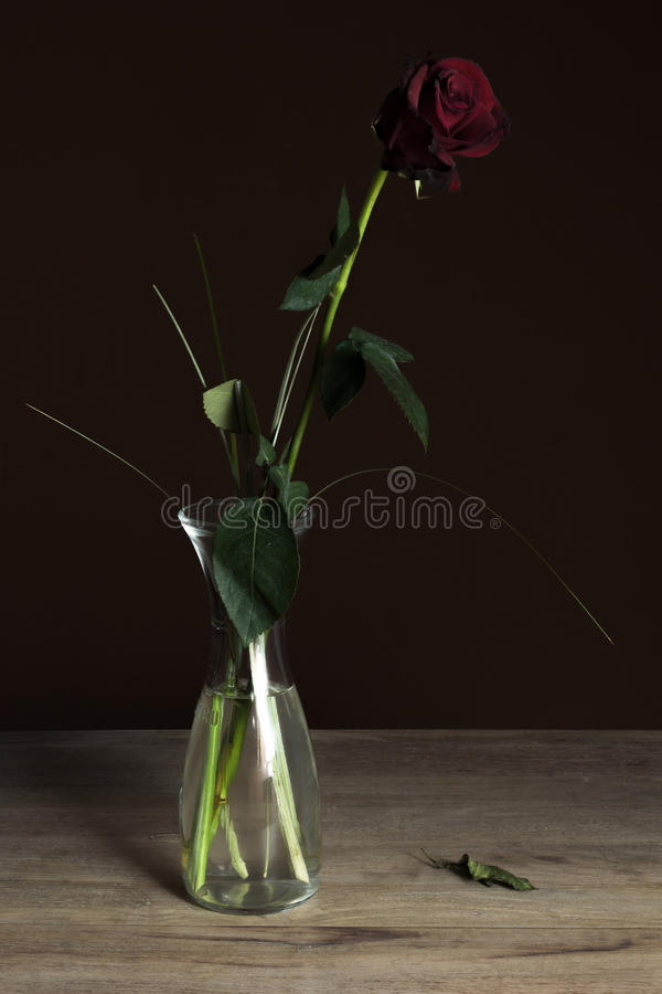 Rose in a carafe. Dying Rose in a carafe stock photos