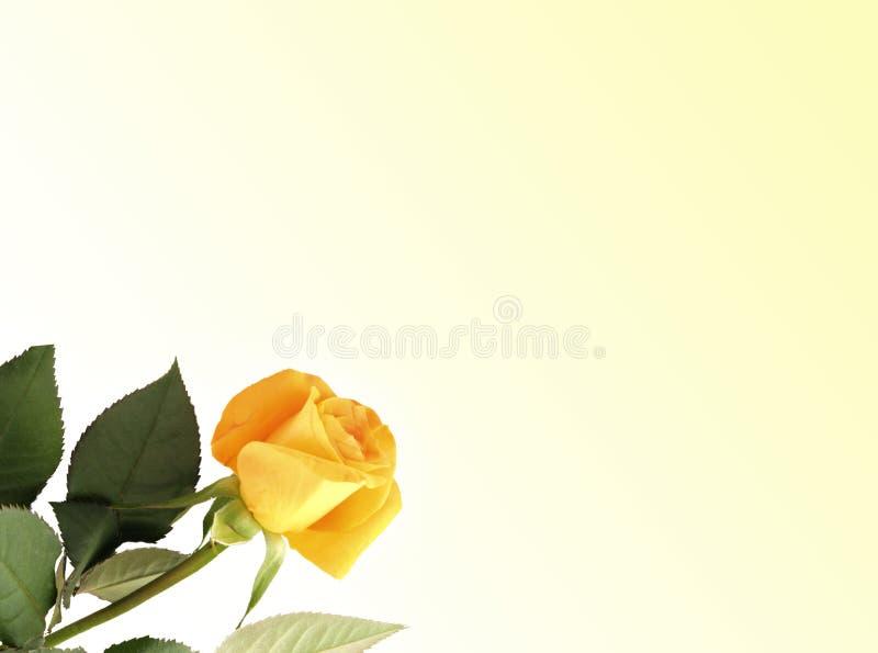 Rose Card imagens de stock royalty free