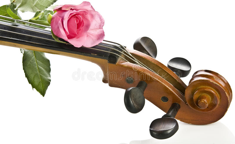 Rose on cello isolated stock image