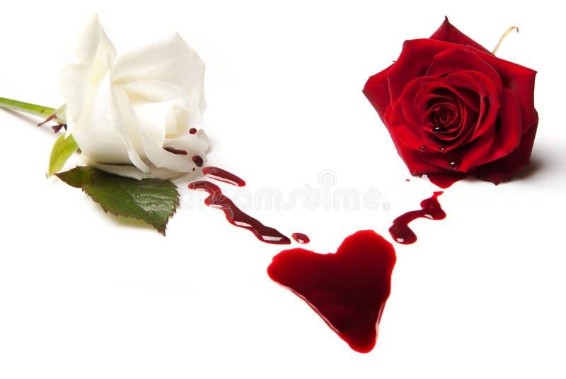 Rose che sanguinano un cuore fotografia stock