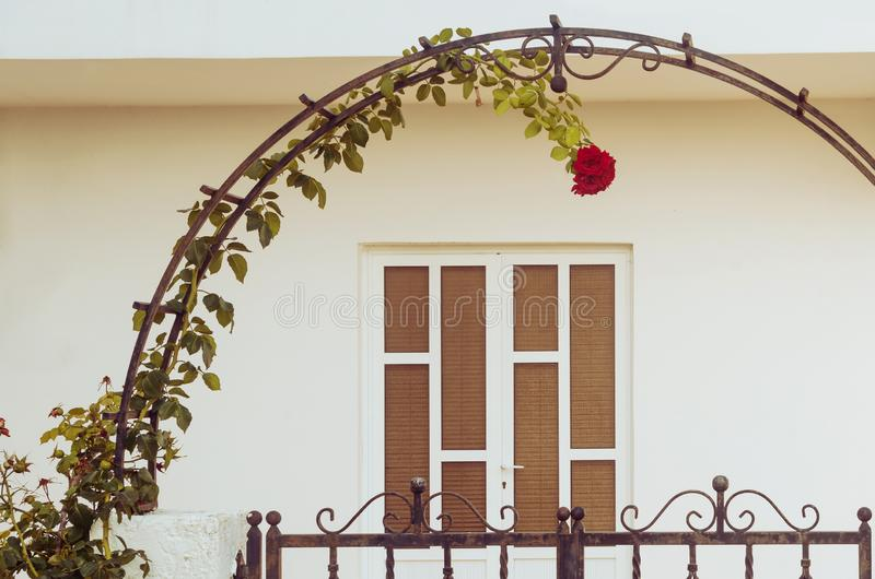 Rose climbing up upon a metal arch royalty free stock image