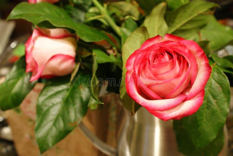 Rose closeup 2 royalty free stock photo