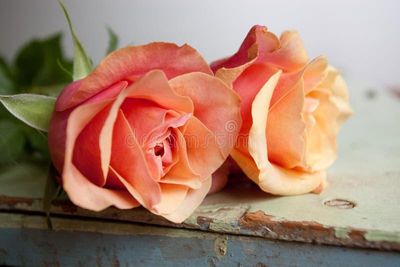 Rose colorate caramella fotografie stock libere da diritti