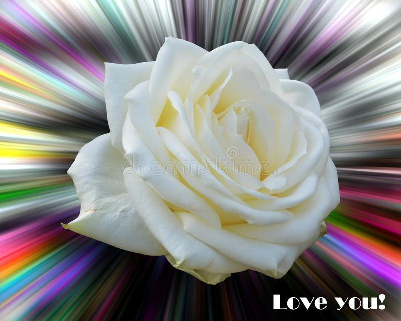Rose on colorful background. Love image stock photo