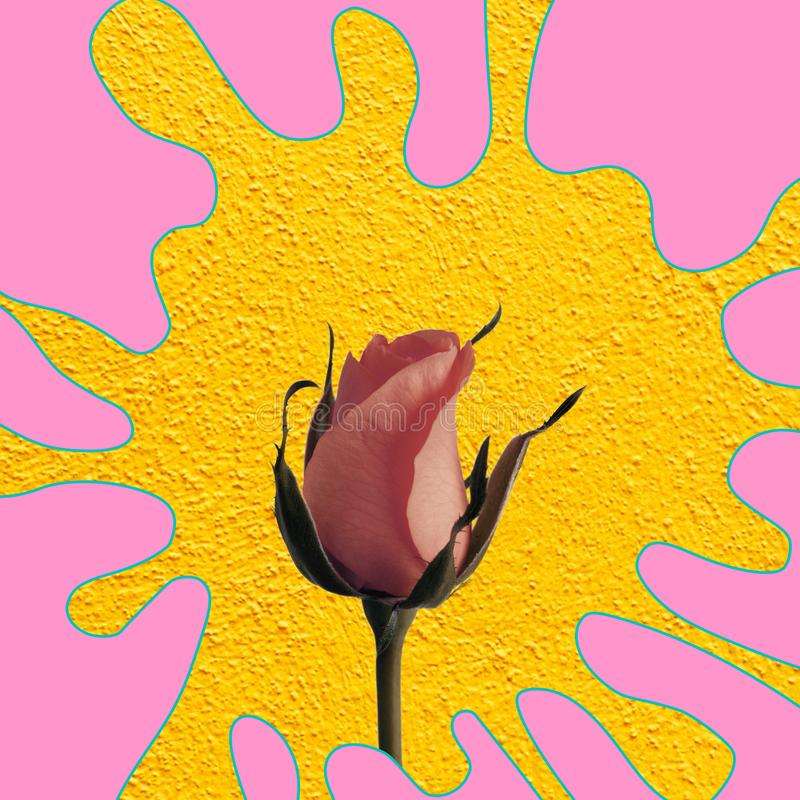 Rose on colorful backgrounds stock image
