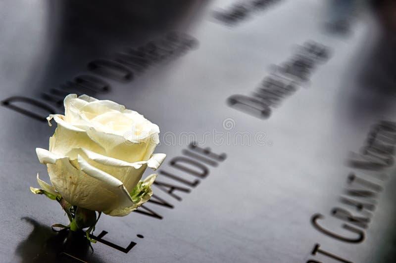 Rose commémorative images stock