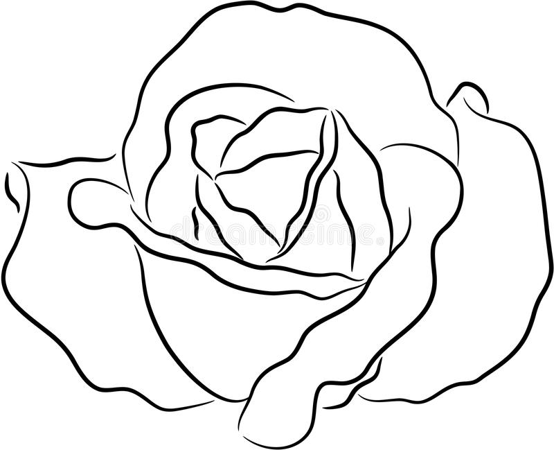 Contour Line Drawing Rose : Rose contour stock vector image of decoration decorative