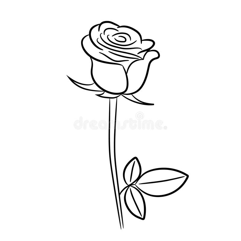 Rose contour image vector illustrations stock illustration