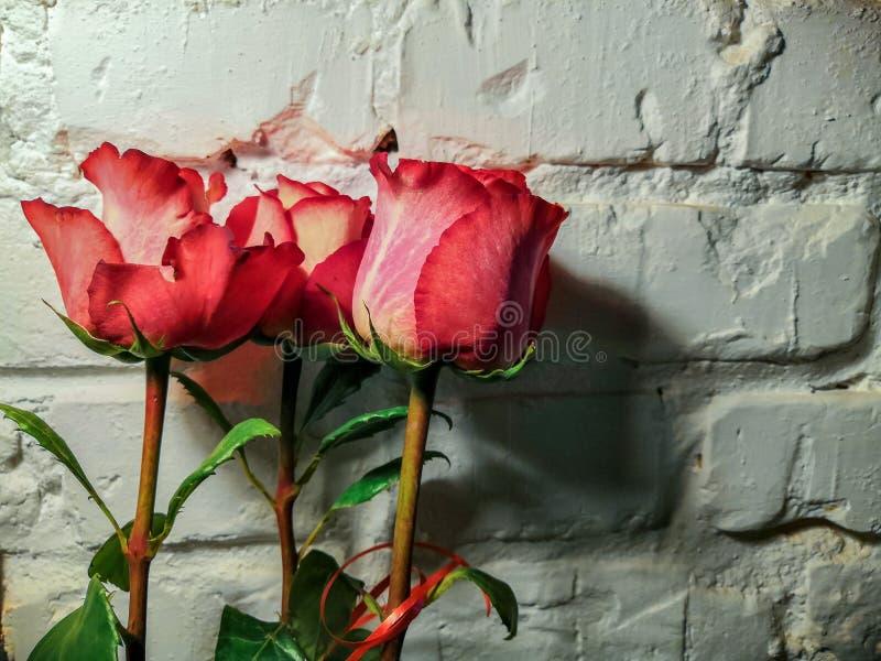 Rose contro un muro di mattoni bianco fotografia stock