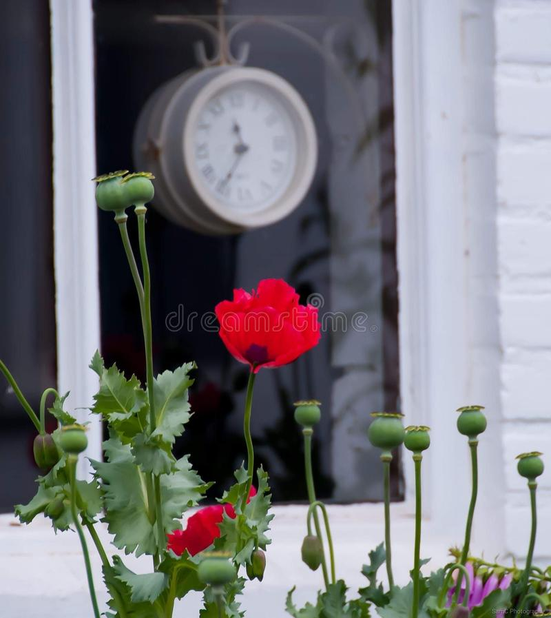 Rose Cute Little Art Market royalty free stock photography