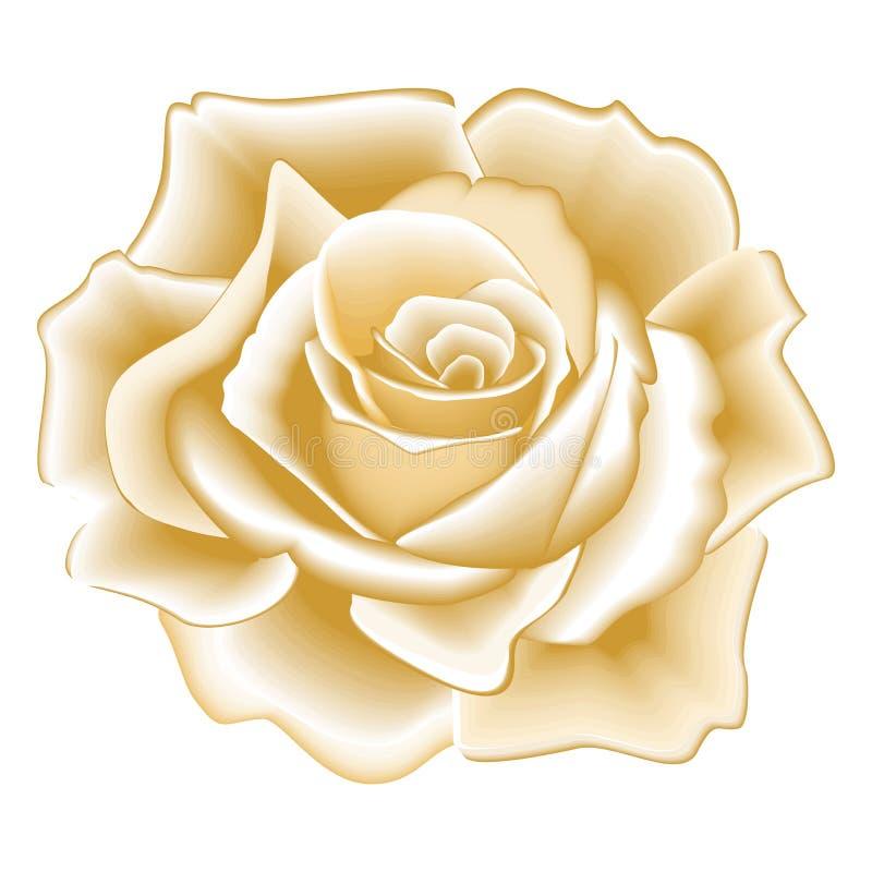 Rose d'or photos libres de droits