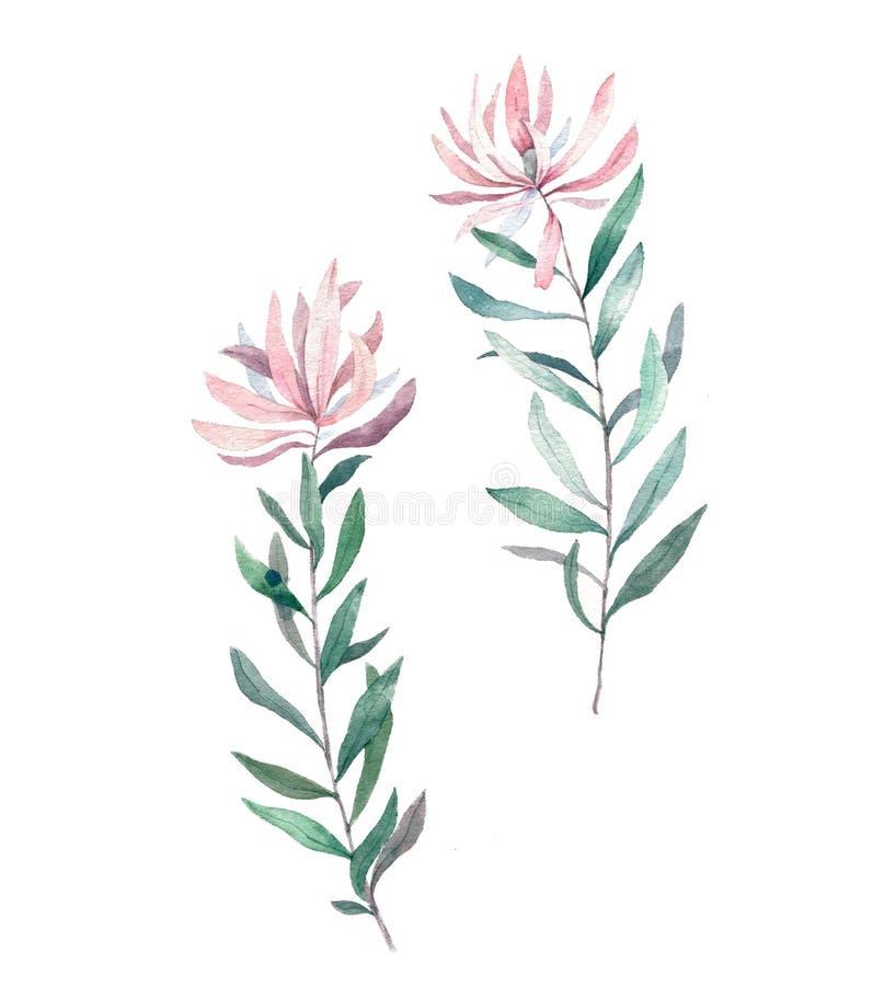 Rose Rose d'aquarelle, lis d'alstroemeria, pivoine blanche, hortensia, eucalyptus, plantes et herbes Groupe de mariage de fleurs  illustration libre de droits