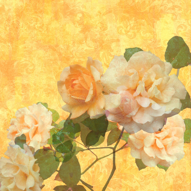 Rose d'ardore illustrazione di stock