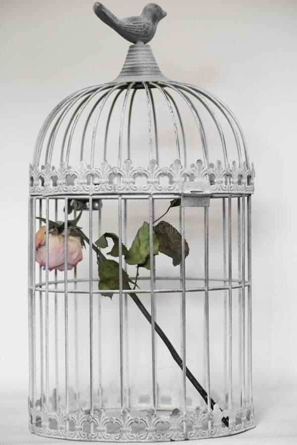 Rose dans la cage d'oiseaux image libre de droits