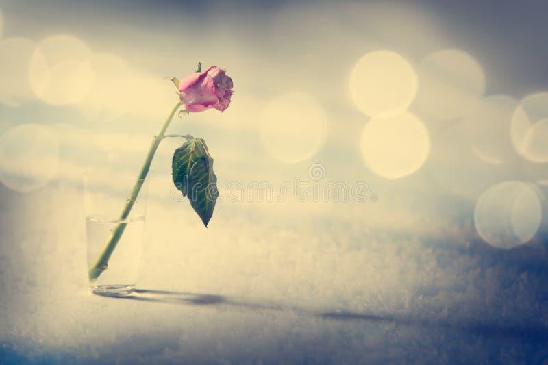 Rose de mort sur le fond de neige image stock